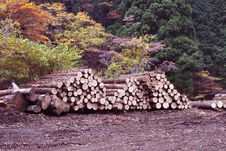Logs Recently Harvested Royalty Free Stock Image