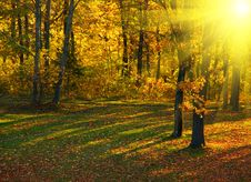Free Autumn In The Park Stock Photos - 8406703