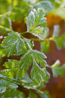 Free Green Plants Covered By Hoarfrost Stock Images - 8407554