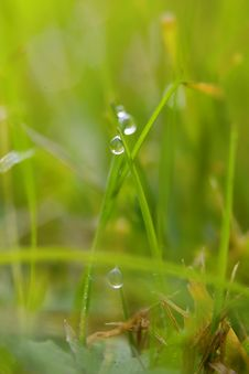 Free Green Grass With Dew Drops Stock Images - 8407764