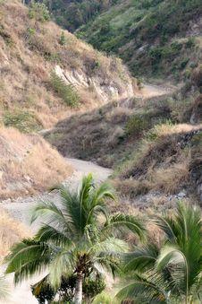 Free Manzanillo - Road Royalty Free Stock Photos - 8408988