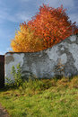 Free Autumn Color Leaves Behind The Old Wall Royalty Free Stock Photography - 8418337