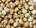 Free Quail Eggs Stock Images - 8419194