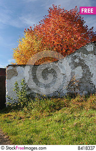 Autumn color leaves behind the old wall Stock Photo