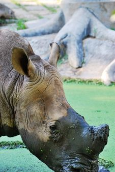 Free The Rhinoceros (close Up) Stock Photo - 8410510