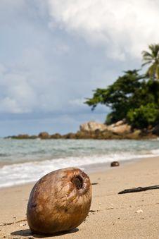 Free Coconut Stock Photo - 8410700