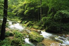 Free Rivulet In The Forest In ZhangjiaJie National Park Stock Images - 8410964