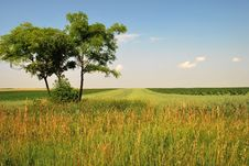 Free Summer Landscape - Trees On Green Field Royalty Free Stock Images - 8411039