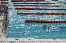 Free Swimming Competition Royalty Free Stock Images - 8412779