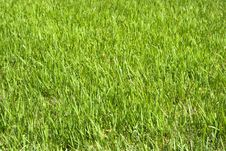 Free Fresh Green Grass Royalty Free Stock Photos - 8413308
