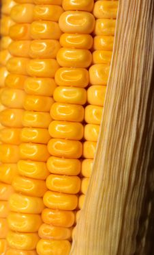 Free Corn Stock Photo - 8413420