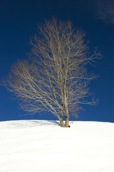 Free Winter Tree Royalty Free Stock Photography - 8413857