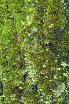 Free Moss On Bark Royalty Free Stock Photography - 8416717