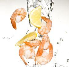 Free Shrimp Royalty Free Stock Photos - 8417608
