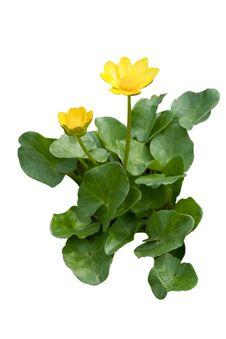 Free Wildflowers Stock Photo - 8418130