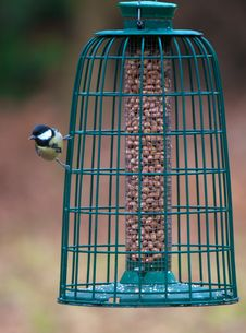 Great Tit (Parus Major) Stock Images