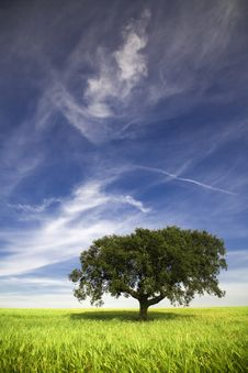 Single Tree In The Field Stock Photos