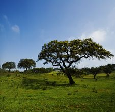 Free Field Landscape With Trees Royalty Free Stock Photos - 8419168