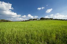 Free Spring Field Landscape Royalty Free Stock Photo - 8419355