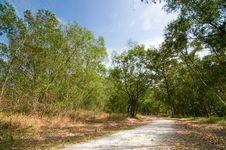 Free Footpath Into The Forest Royalty Free Stock Image - 8419686