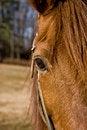 Free Horses Eye Stock Images - 8427884