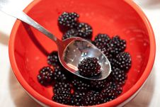 Free Blackberries Royalty Free Stock Image - 8420116