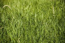 Free Grass Royalty Free Stock Image - 8421136