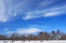 Free Winter Landscape Royalty Free Stock Photo - 8421835