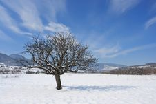 Free Lonely Tree Royalty Free Stock Photography - 8421847