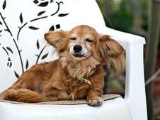 Free Dog Stock Photos - 8422813