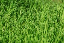 Free Dew On A Grass Royalty Free Stock Images - 8423219