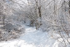 Winter In A Forest Royalty Free Stock Photography