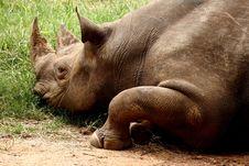 Free Rhino In Zoo Stock Image - 8423331