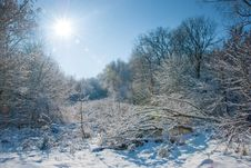 Winter In A Forest Stock Images