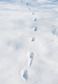 Free Footprints Royalty Free Stock Image - 8423456