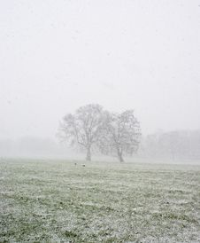 Free Snowy Park Stock Images - 8423494