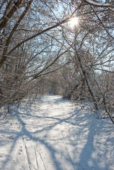 Winter In A Forest Royalty Free Stock Photos