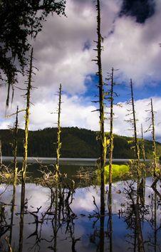 Free Lake Stock Photography - 8425232