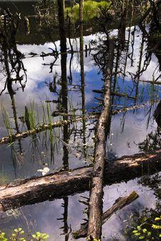 Free Lake Stock Photos - 8425263