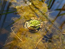 Free A Frog Stock Photography - 8425622