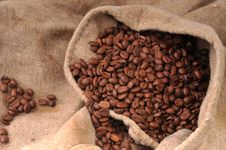 Free Coffee Grains Royalty Free Stock Images - 8425819