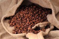 Free Coffee Grains Stock Photo - 8425820