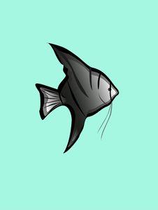 Free Angelfish Stock Image - 8427361
