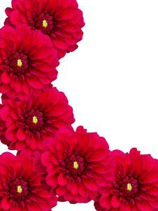 Flowers Dahlias Stock Photography