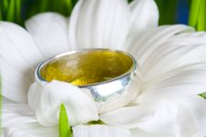 Camomile And Ring Stock Photos