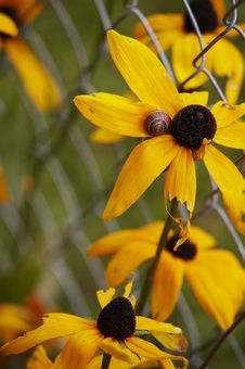 Free Yellow Flowers And Snail Stock Image - 8428751