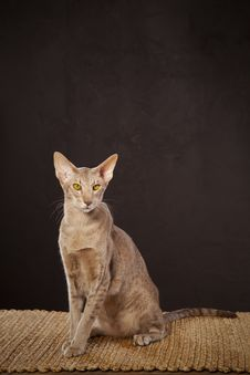 Short Haired Cat Stock Images