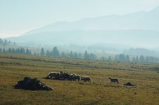 Free Flock Of Sheep Stock Photography - 8429872
