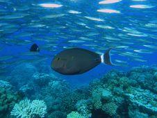 Shoal Of Fish Stock Image
