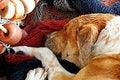 Free Dog Sleeping Royalty Free Stock Photography - 8436717